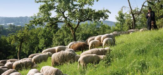 Unser Lammfleisch